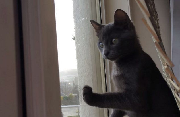 Kitten's First Time Seeing Snow (Video)