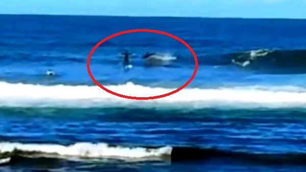Dolphin Takes Out Stand-Up Paddleboarder (Video)