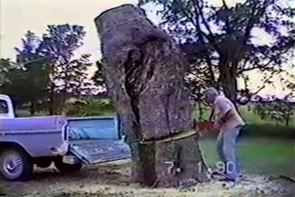 Man Saws Tree into Truck Bed (Video)