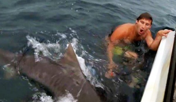 Bird Cage Diving with Sharks Nearly Turns Deadly for Crazy Aussie Guy (Video)