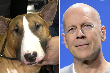 Celebrity Doppelgangers: Westminster Dog Edition