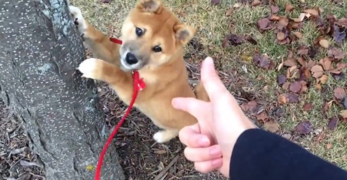 This Adorable Puppy Is Ready To Be Safely Arrested
