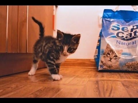 Community Post: Happy Feet - Dynamo Kitten