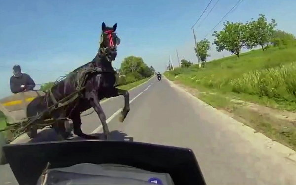 Biker Girl Barely Misses Hitting a Horse on the Road (Video)