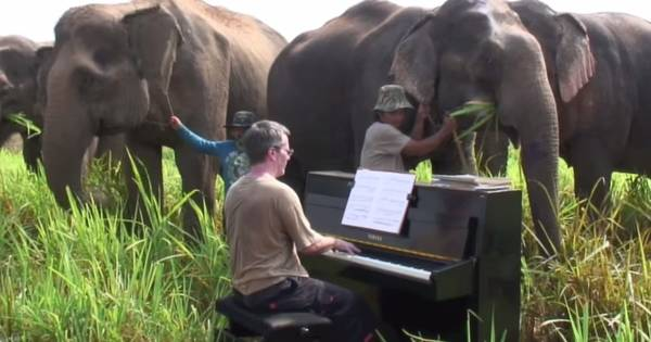 This Pianist Plays Beautiful Beethoven Melodies For Elderly Elephants in Thailand.