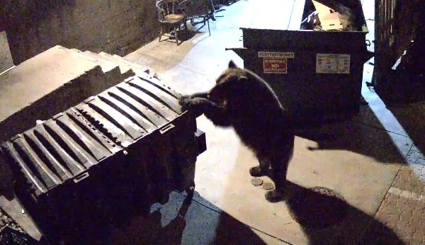 Bear Steals Dumpster from Colorado Springs Restaurant (Video)