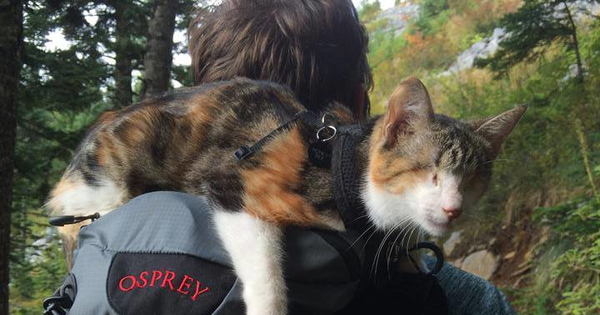 This Cute Cat May Be Blind, But She Still Has Her Sense Of Adventure.