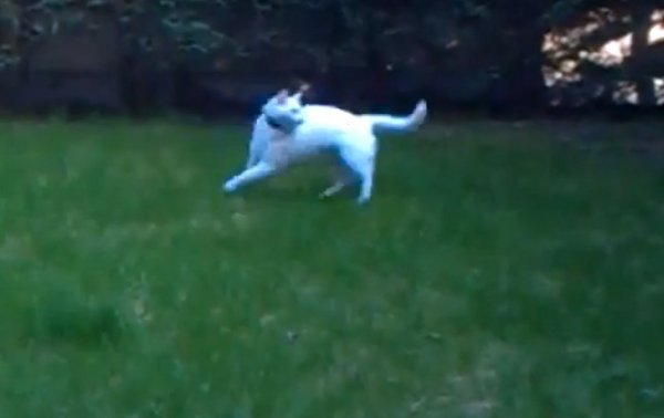 Funny Spinning Cat (Video)