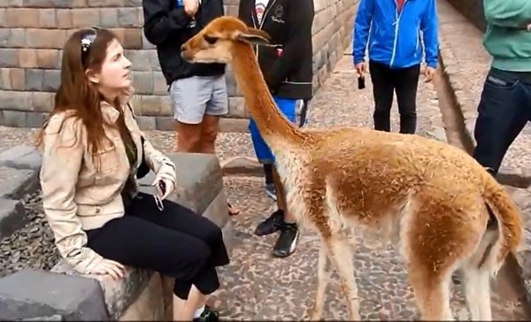 Vicuna Spits in Girl's Face (Video)