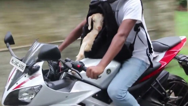 Man and Baby Goat Ride a Motorcycle (Video)
