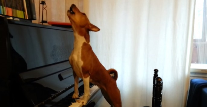 Dog emotionally wails a forlorn ballad as he and his human play the piano