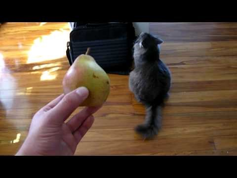 What do Cats and Pears Have in Common?