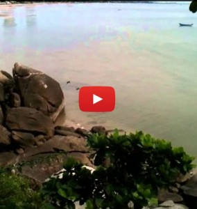 Monkeys cliff diving