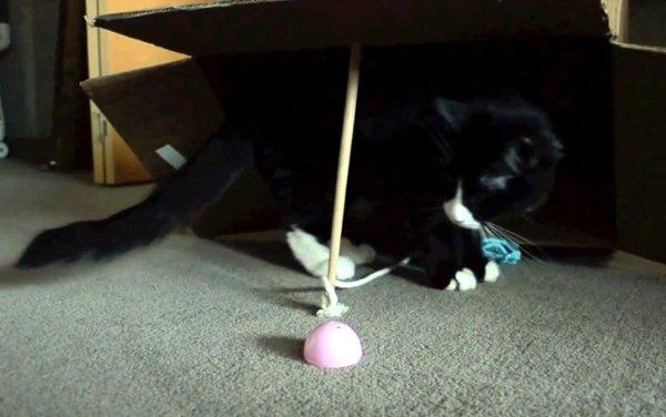 Cat Traps Himself in a Box (Video)