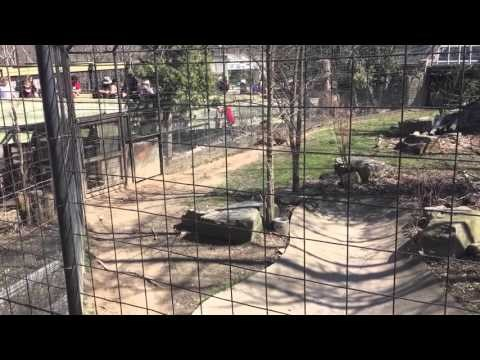 Which Was a Worse: Jumping the Barrier at a Tiger Pen or Shouting 'You're a Moron' Between Two Adults Afterwards?