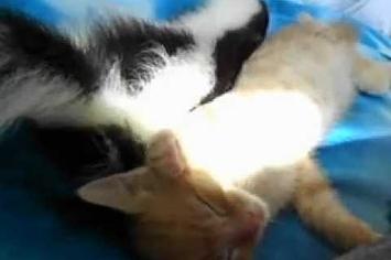 Community Post: Kitten And Skunk Are True Buddies