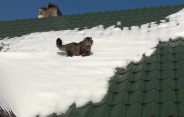 Cat Slips off Snow-Covered Roof, Acts Like It's No Big Deal (Video)