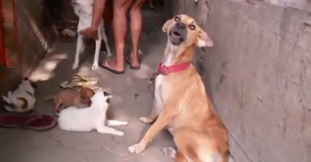 These Dogs Can't Really Help What They're Doing To People, But The Right People Can
