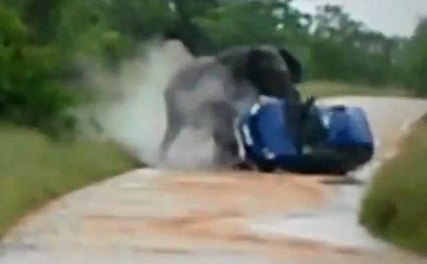 Elephant Overturns Car in Kruger National Park (Video)
