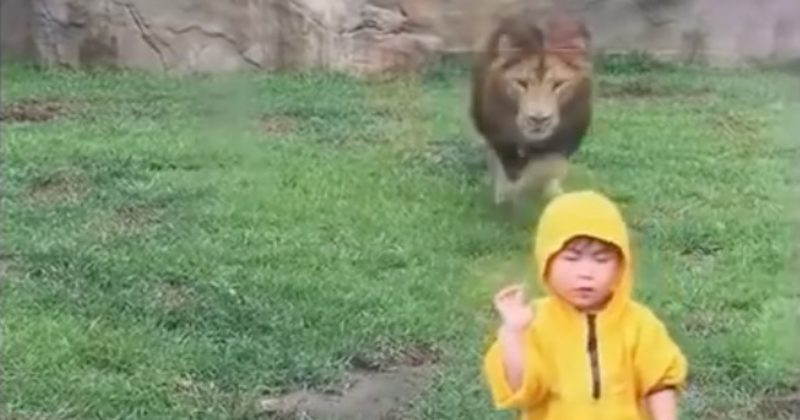 The Video Might Look Adorable, But A Few Inches Of Glass Just Saved This Kid's Life