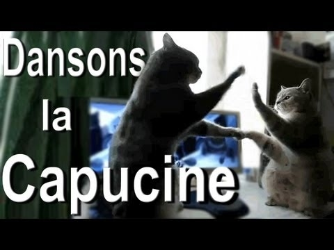 Community Post: These French Cats Playing Pat-A-Cake Is The Most Adorable Thing You'll See All Day