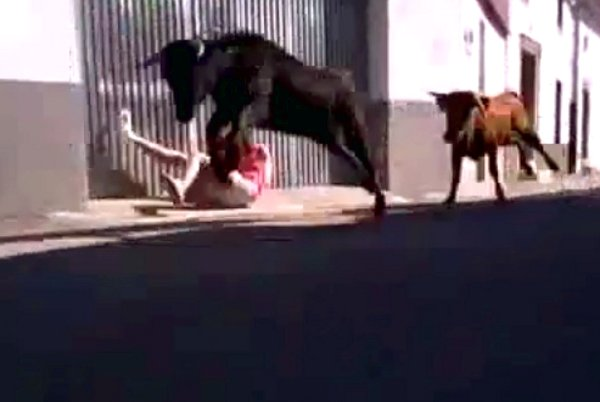 Running with the Bulls Fail (Video)