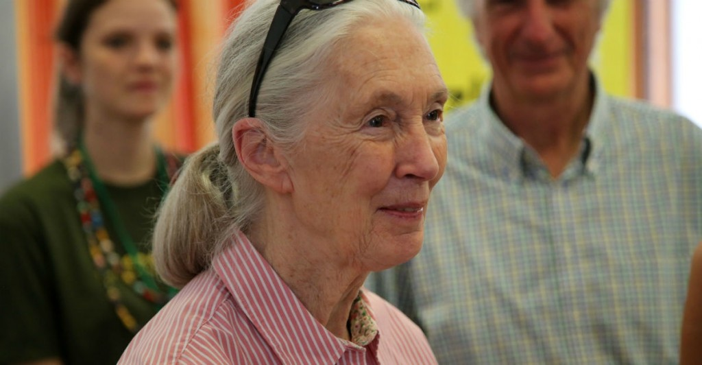 6 spot-on things Jane Goodall said about inequality and saving the planet.