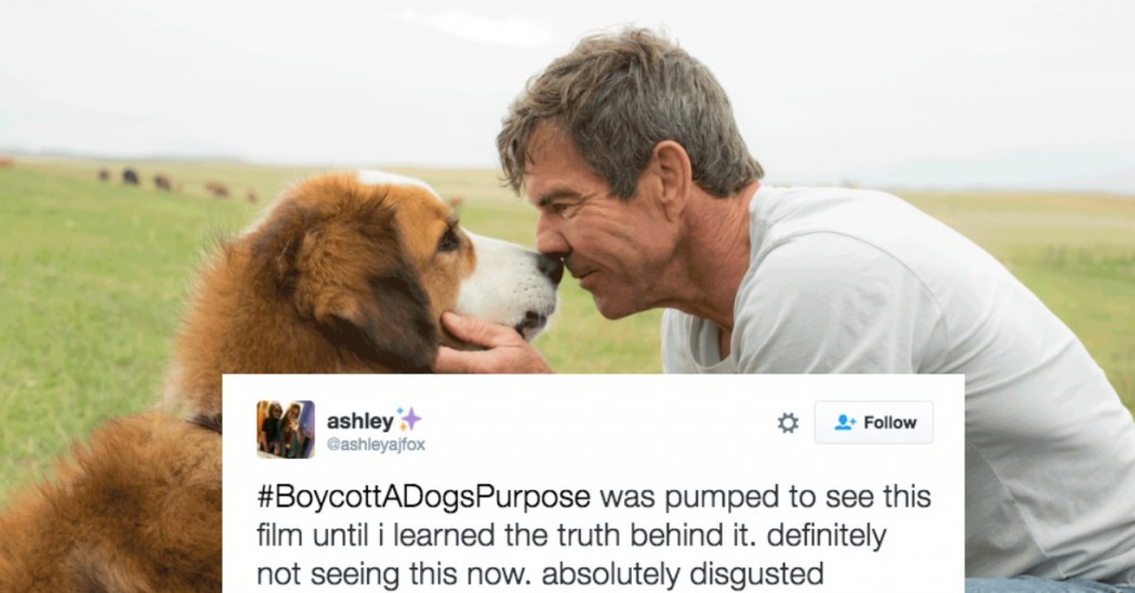 People Are Boycotting 'A Dog's Purpose' After Disturbing Video Footage Was Released