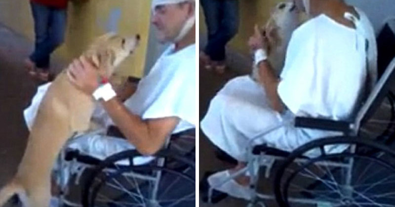 He'd Been In The Hospital For 8 Days Before A Nurse Brought His Friend To See Him