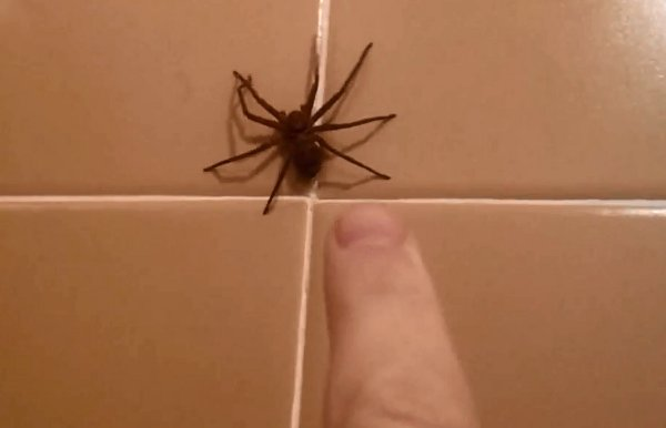 How NOT to Shoo Away a Spider (Video)