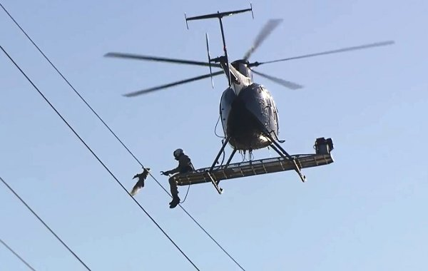 Helicopter Crew Rescues Seagull from Power Lines (Video)