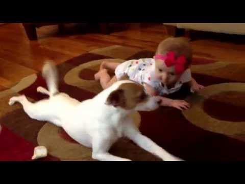 This Very Clever Pup Teaches a Baby to Crawl