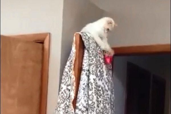 Door Kitten Playing Catch (Video)