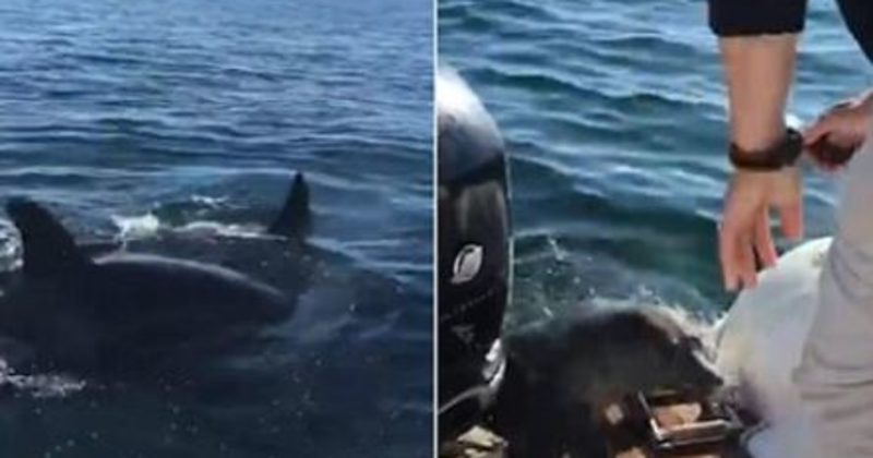 They Were Out Whale Watching When They Witnessed Predators In Action