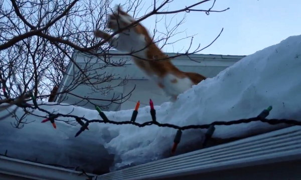 Cat Jumps off Roof, Faceplants into Snow (Video)