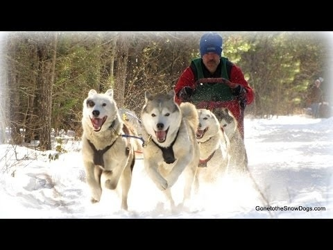 Community Post: DOG SLED TAKES OUT GOPRO!