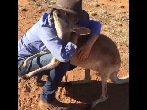 Abi the Kangaroo Loves to Cuddle and Give Hugs