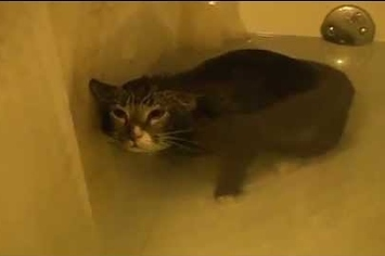 Community Post: Saddest Cat In The World Hates His Bath So Much He Meows Underwater