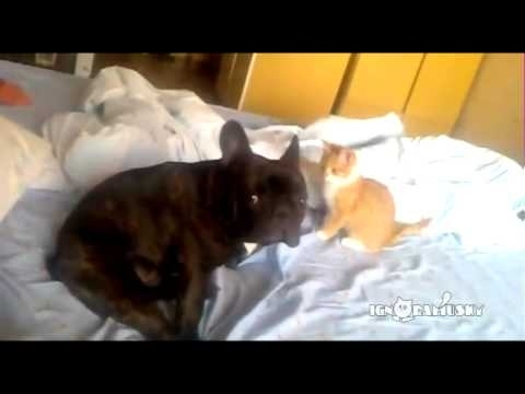 Community Post: Cat Assassin Strikes