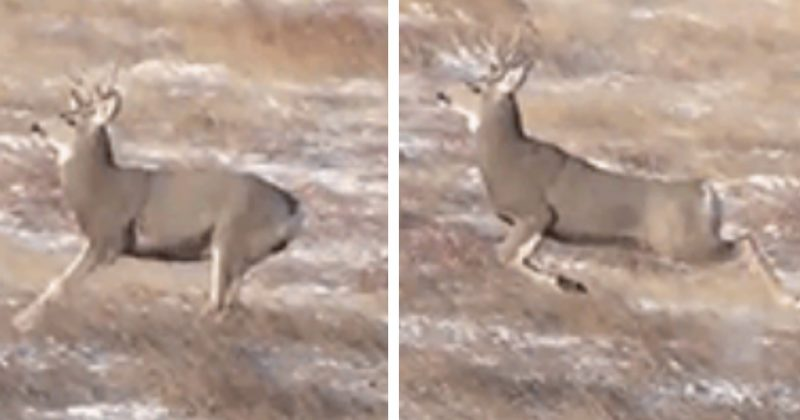 Watching Videos Of Bouncing Deer Is The Comic Relief You Never Knew You Needed