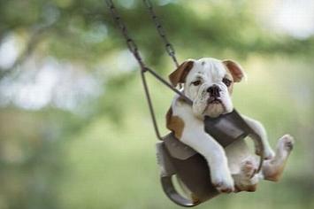 Community Post: Dog Goes Swingin'