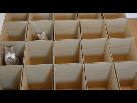 9 Cats Play With Cardboard Boxes