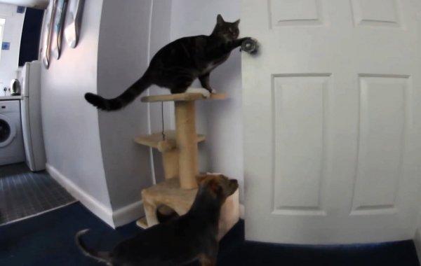 Cat Opens Door for Dog (Video)