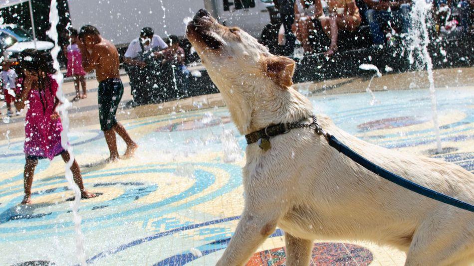 Summer-heat-dog-flickr