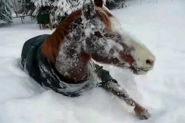 Horse Loves Snow (Video)