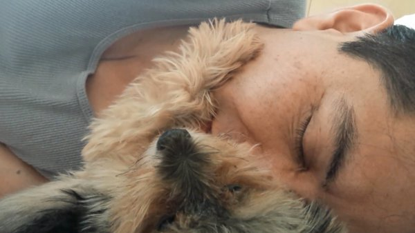 Little Yorkie Dog Petting a Man's Face (Video)
