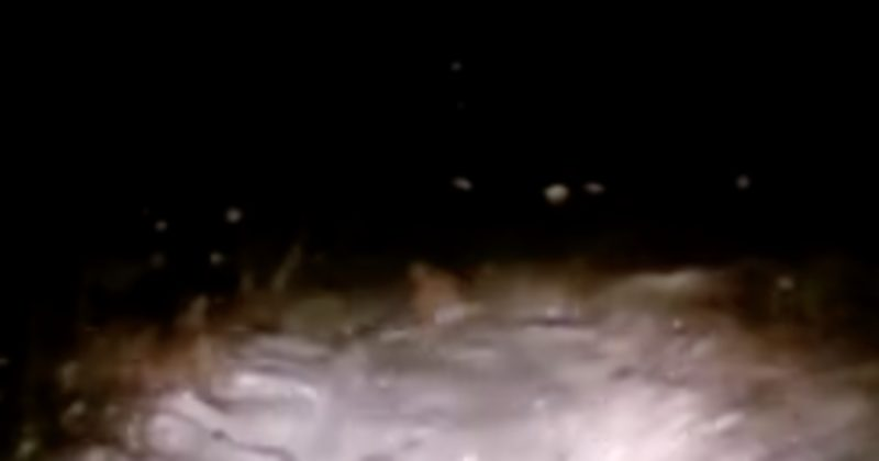Traveling At Night, They Couldn't Believe Their Eyes When A Yeti Crossed The Road