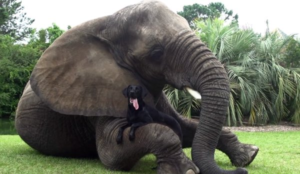 Elephant and Dog Play in Water (Video)