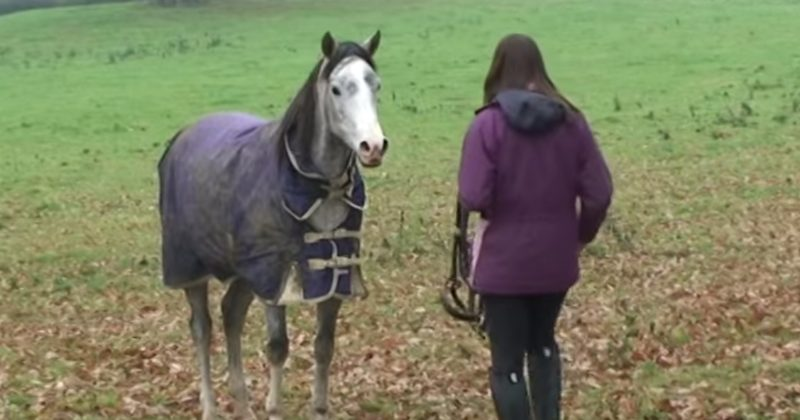After 3 Weeks Away, She Returned Home To Her Horse  This Reaction Is Priceless