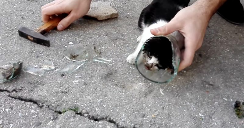 Men Rescue A Terrified Kitten With Its Head Stuck In A Glass Jar...Poor Thing